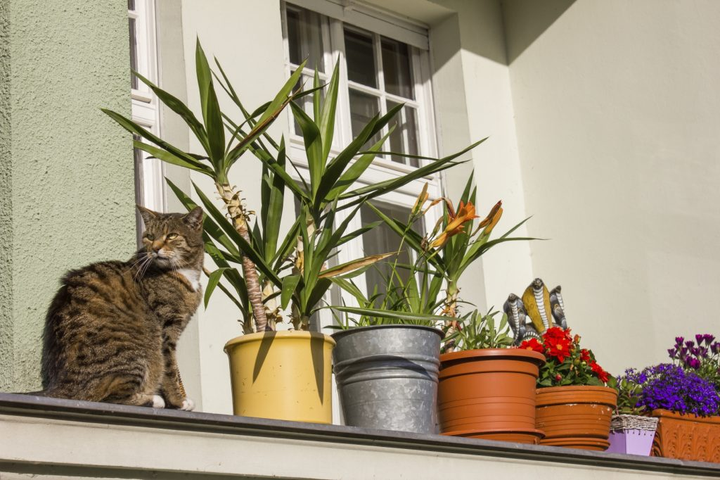 Plants on a balcony with a cat